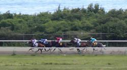 Horses race down the backstretch at the Randall 'Doc' James Racetrack.