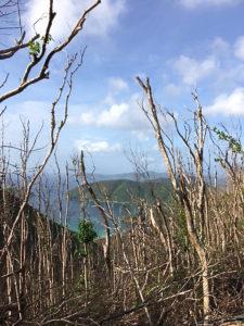 Damaged trees at the Maho Bay Overlook.
