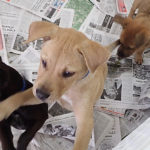 Curious puppies check out their new surroundings at the Pet Place.