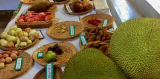 The varieties of mangos on display at Mango Melee 2017 and in the past will not be part of this year's event because of the damage to so many trees from Hurricanes Irma and Maria. (Anne Salafia photo)