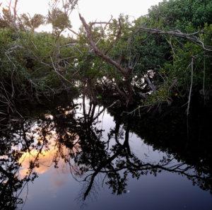 Magens Bay mangroves at sunset.