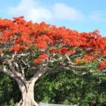 Arborists' Workshop to Teach Selection and Care of Trees