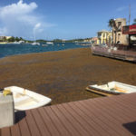 Islands Stagger Under Weight of Sargassum