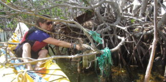 Cleanup volunteer takes plastic off a mangrove in 2019. (Photo by Kristin Wilson Grimes)
