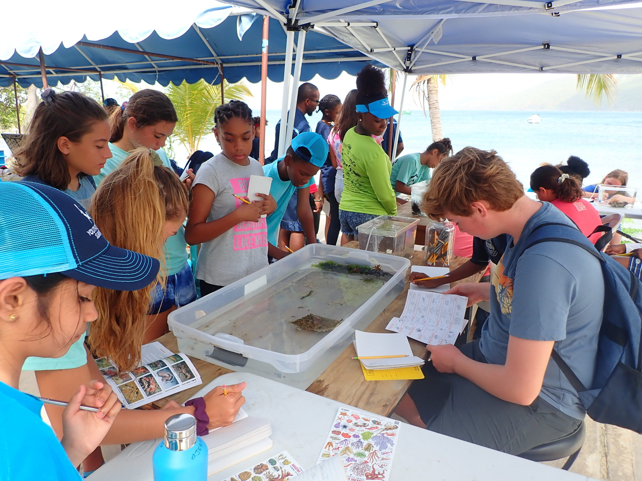 Students that participate in the Youth Ocean Explorers Program get to learn marine science in a hands on learning environment (Photo Courtesy of Youth Ocean Explorers Program)